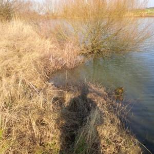 Uferbewuchs mit Ansitzmöglichkeiten